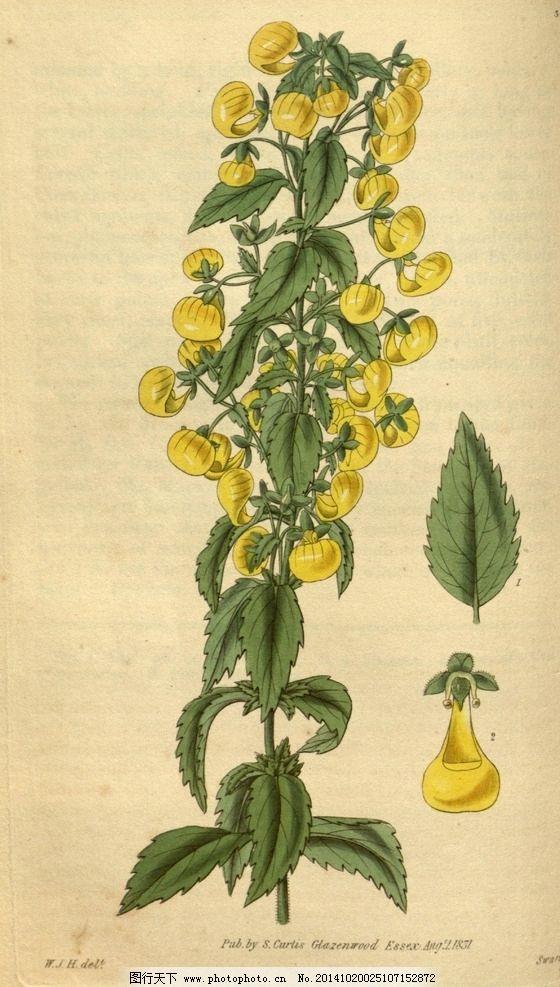 植物花图片,传统花卉 复古花卉 手绘花 背景底纹-图行