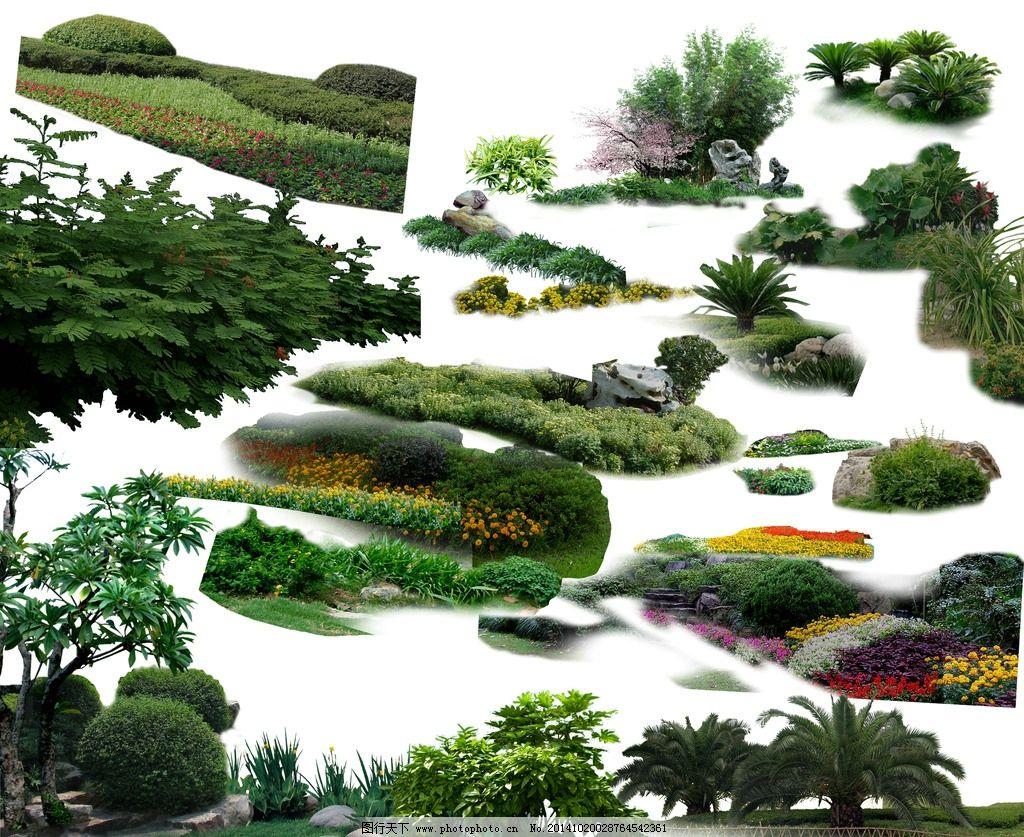 灌木单体手绘线稿