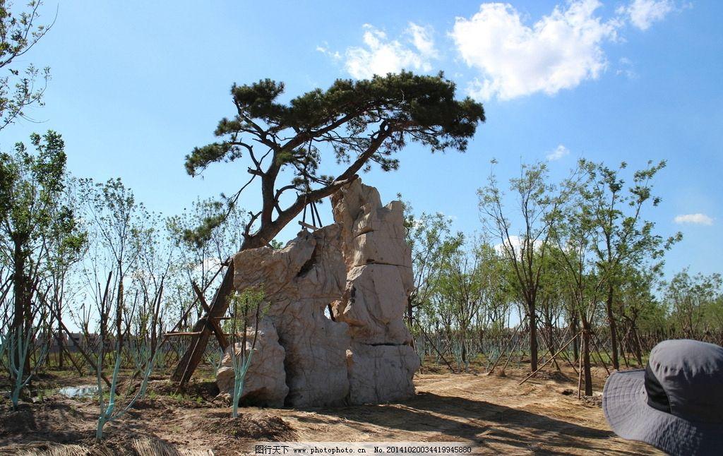 天津官港森林公园图片
