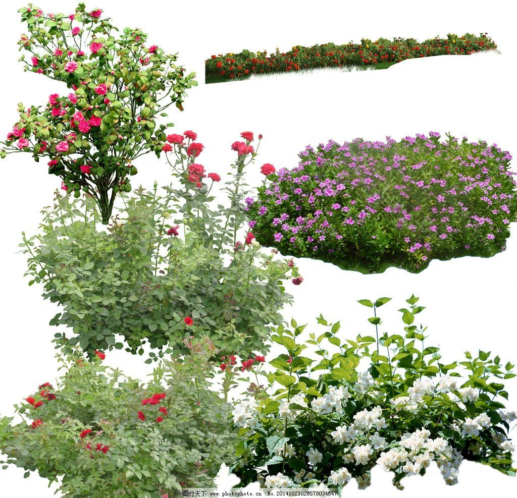 植物psd图片_效果图_环境设计_图行天下图库