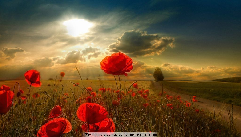 秦皇岛 奥林匹克公园 风景 风光 唯美 清新 意境 自然 花 花海 夕阳