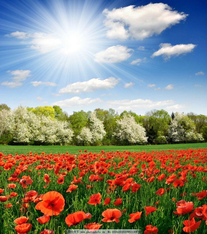 秦皇岛 奥林匹克公园 自然 风景 唯美 清新 意境 花 花海 蓝天 白云