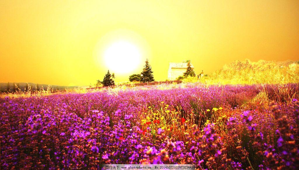 奥林匹克公园夕阳花海 秦皇岛 植物 自然 风景 唯美 清新 意境