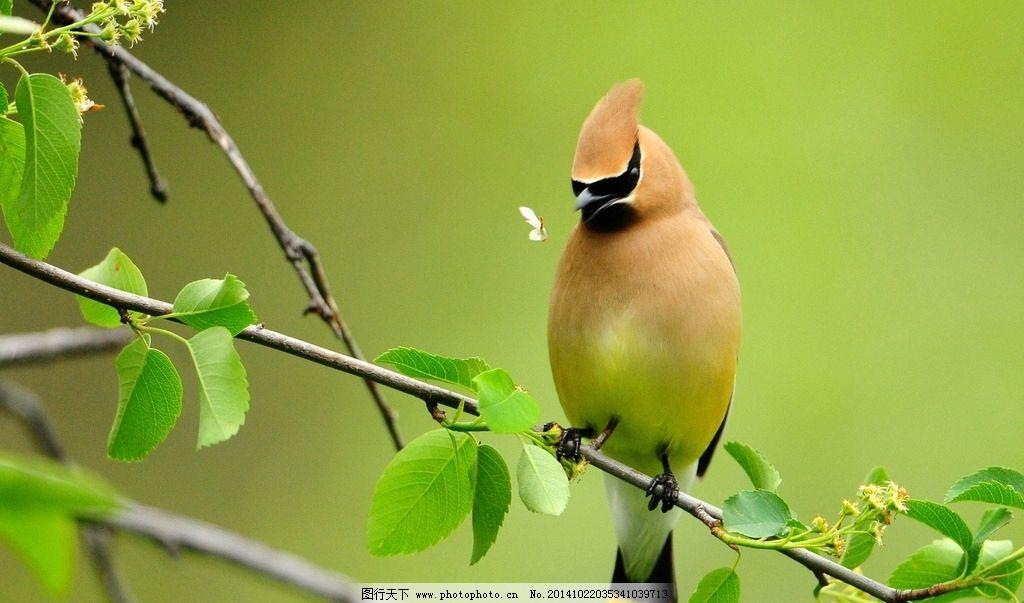 唯美鹦鹉 秦皇岛 野生动物园 鸟 可爱 风景 风光 清新 自然
