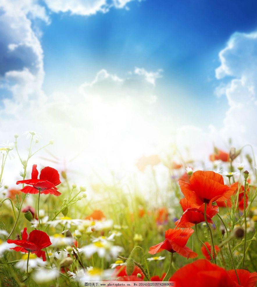 秦皇岛 奥林匹克公园 风景 唯美 清新 意境 自然 植物 春天 春光 花