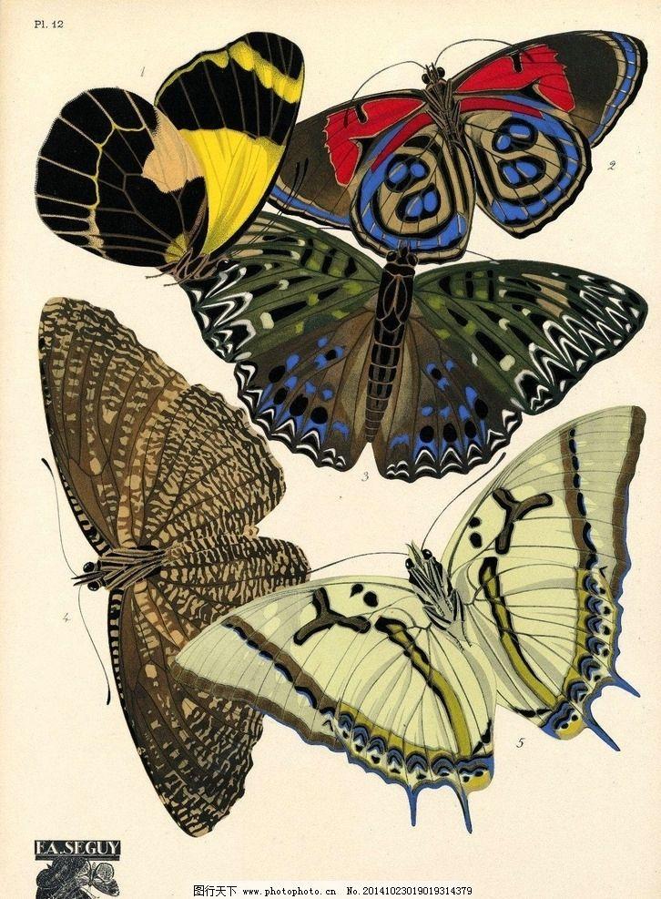 手绘蝴蝶图片