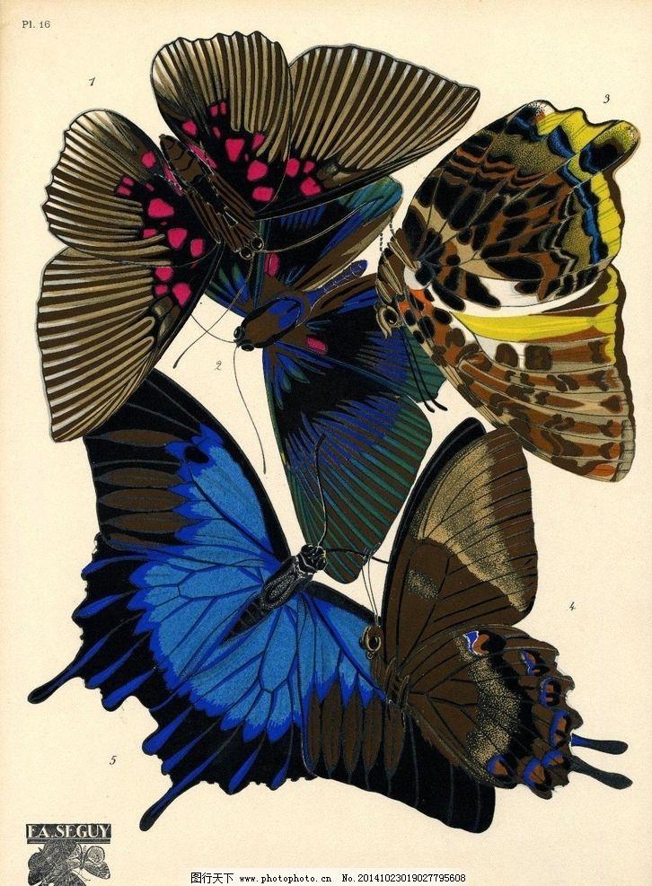 手绘 蝴蝶 素材 图案 肌理 文化艺术 绘画书法