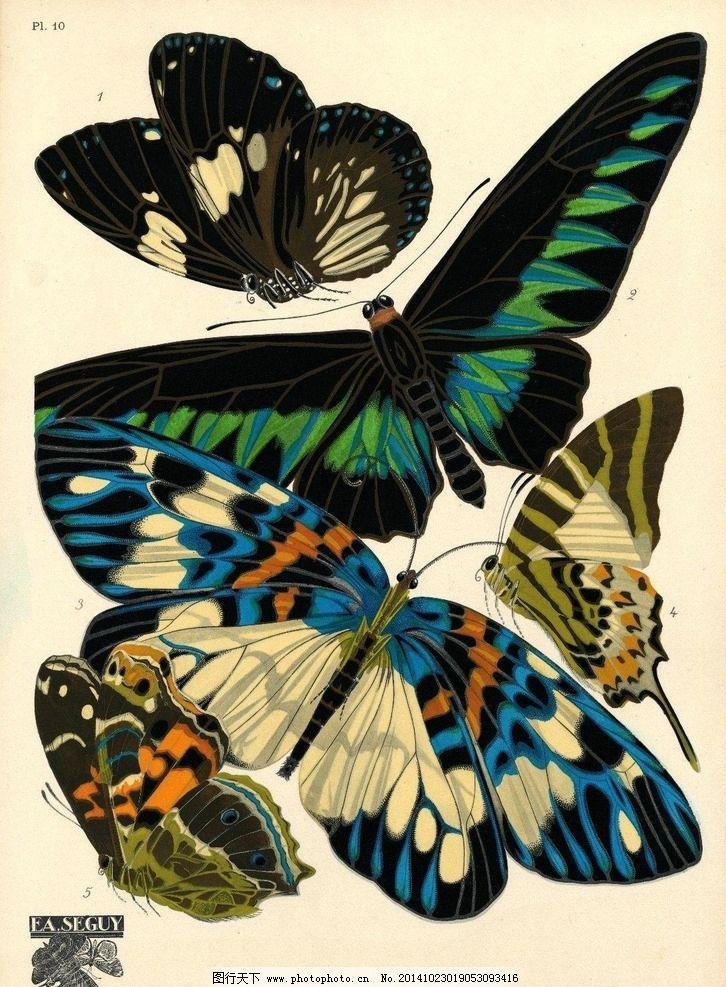 手绘 蝴蝶 素材 图案 图片