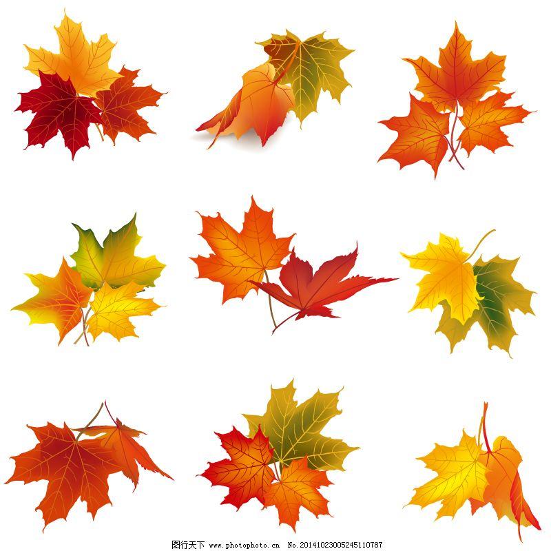 秋季树叶设计免费下载 落叶 秋季 秋天 秋叶 矢量图 树叶 梧桐树 叶子