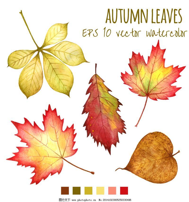 水彩秋叶设计矢量素材免费下载 枫树叶 秋季 秋天 矢量图 树叶 水彩图片
