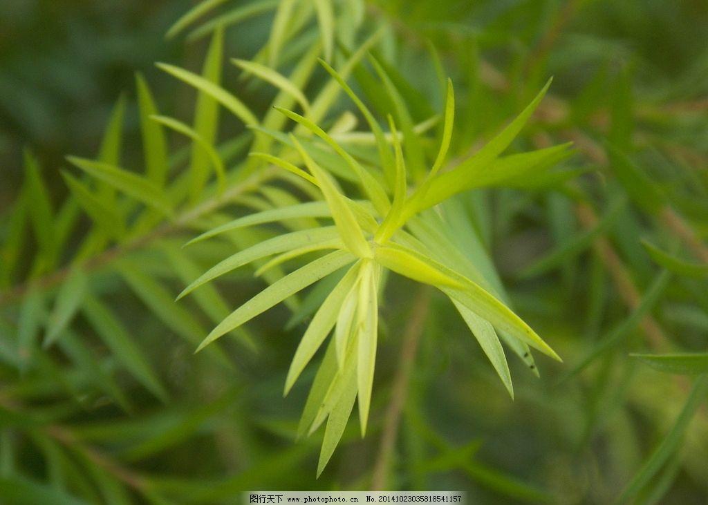 树叶 叶子 树 风景 树枝 环保 绿色 温州一 摄影 生物世界 树木树叶
