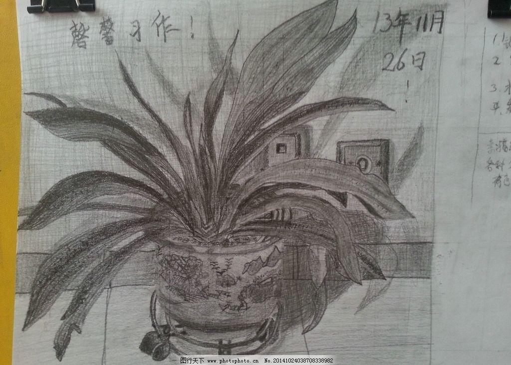 君子兰 素描 兰花 铅笔 手绘 画画 速写 美术 摄影 文化艺术 美术绘画