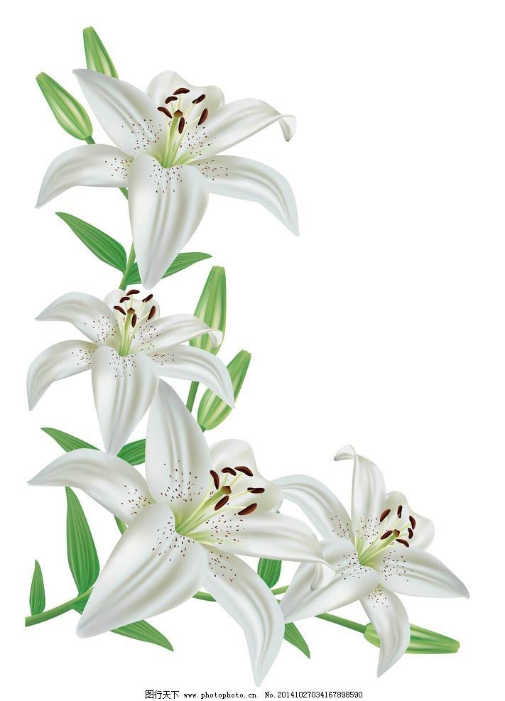 各种百合 花卉 手合花纹 百合 百合移门 百合图案 白百合 手绘花纹
