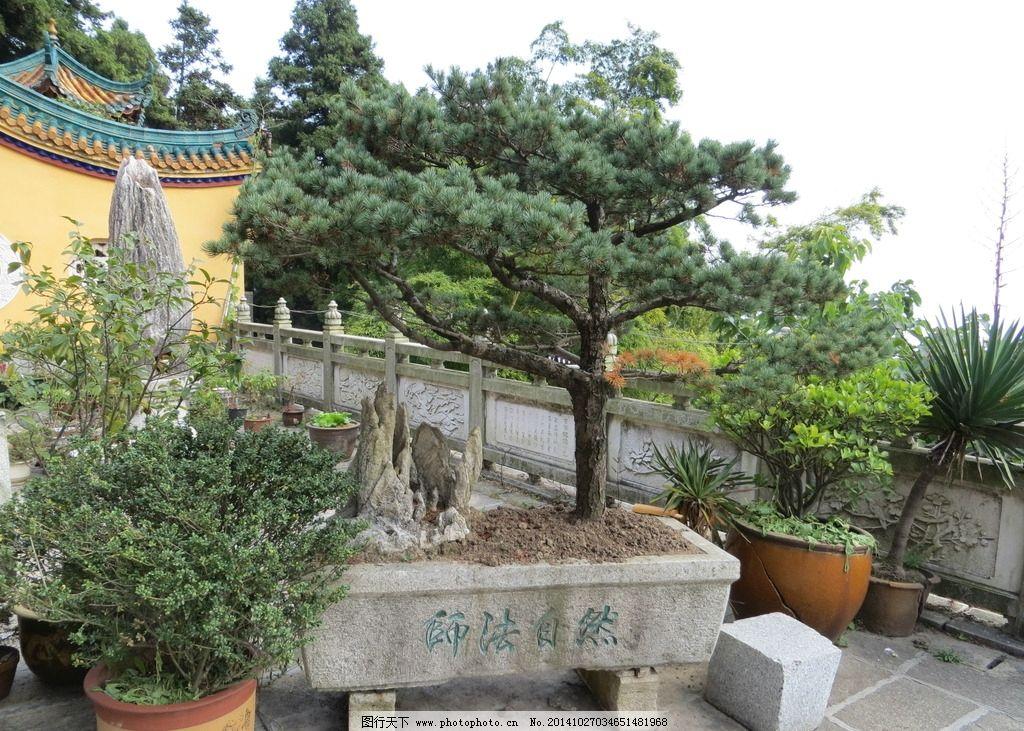 盆景 假山 松树 古屋 石头 摄影 自然景观 风景名胜 180dpi jpg