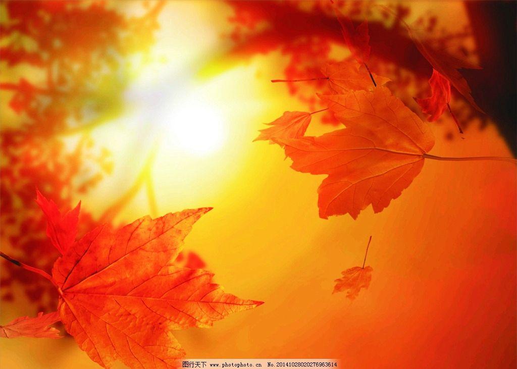 红色背景图 电脑桌面壁纸 星星点点 枫树叶 秋景 霓虹效果 朦胧