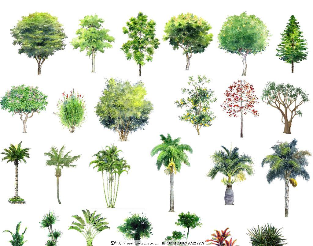 树木 手绘 绿图片图片