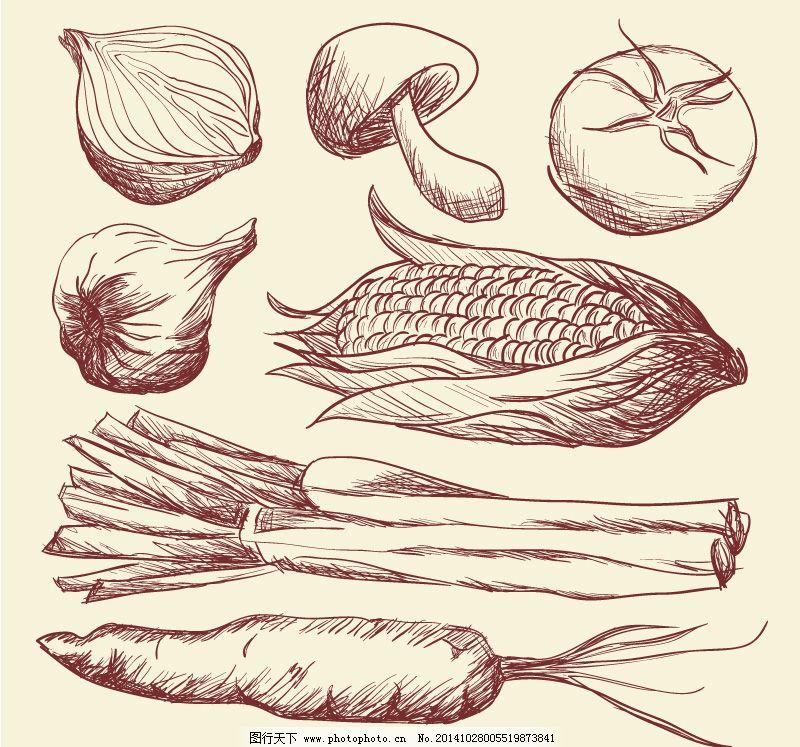 手绘蔬菜设计矢量素材