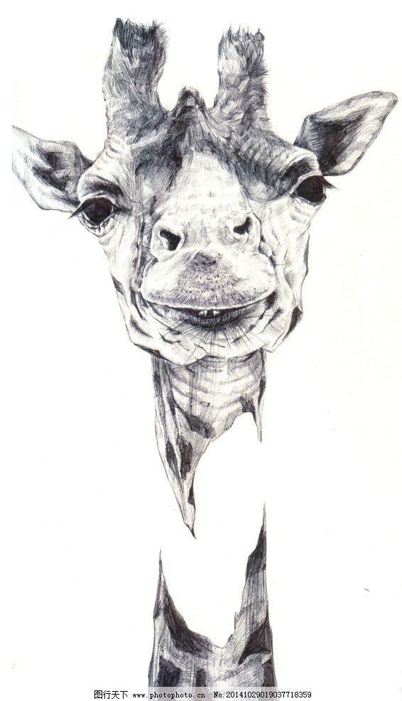 钢笔 黑白 色彩 动物 写实 设计 文化艺术 绘画书法 150dpi jpg