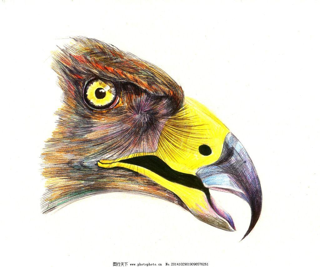 彩色 彩铅 色彩 动物 写实 设计 文化艺术 绘画书法 150dpi jpg