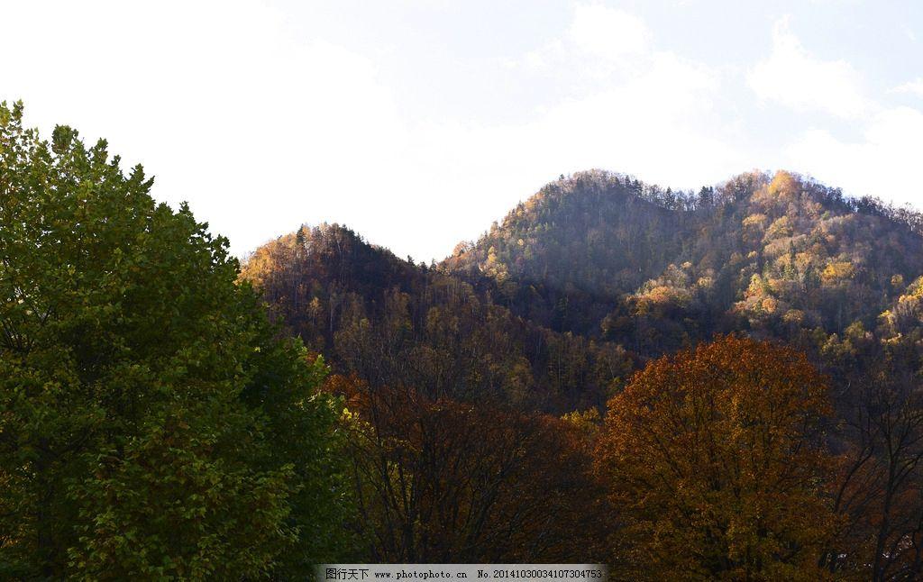 大山树林风景 风景如画 大树 小树 蓝天 森林 摄影 自然景观 山水风景