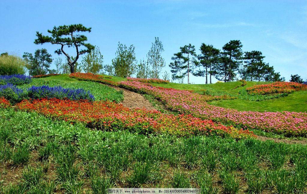 园林植被 红花绿地 苍松 花海 草坡 绿化 园林景观 公园 花园图片