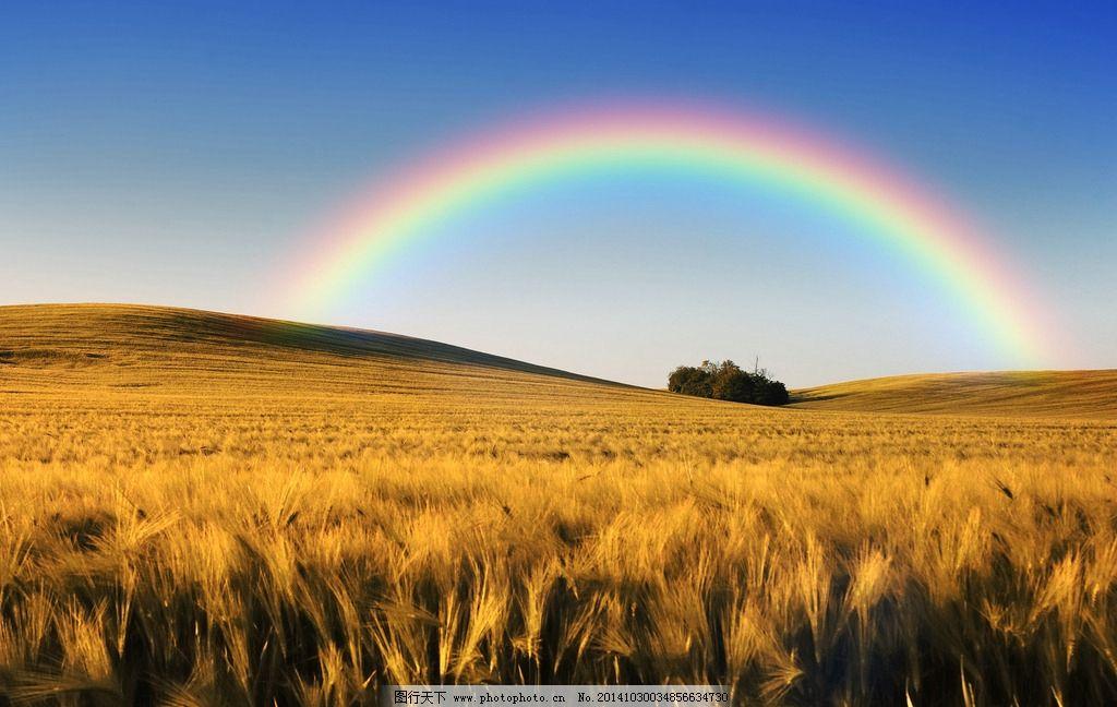 彩虹 雨后彩虹 植物 风景 风光 唯美 意境 清新 蓝天 白云