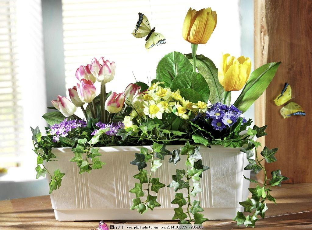 唯美盆栽花卉图片