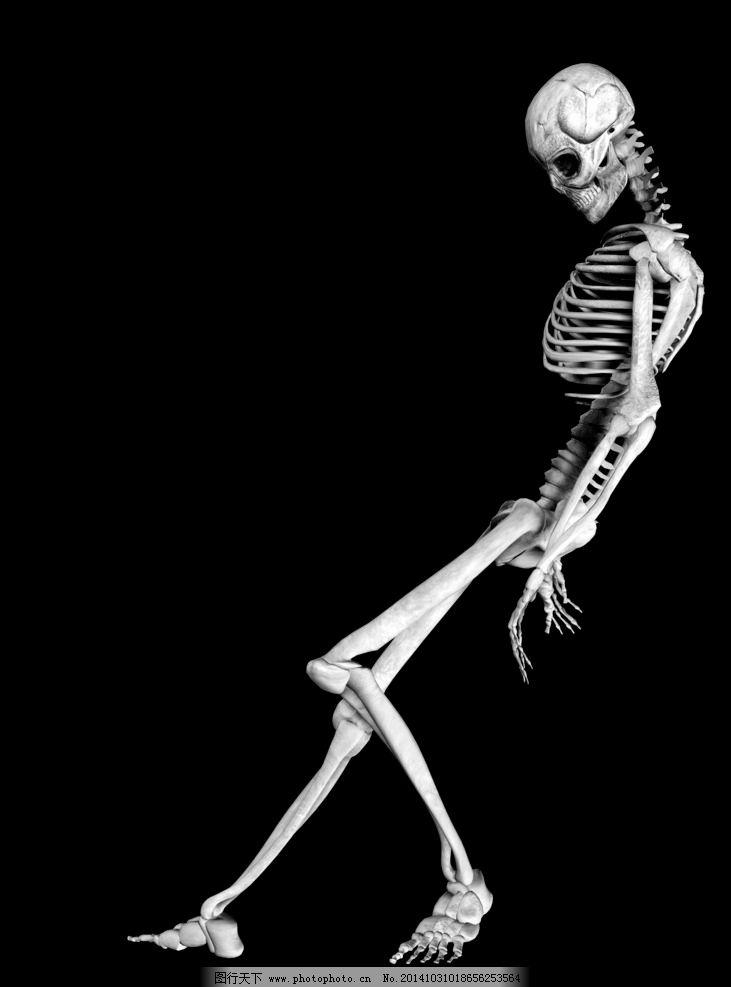 人体骨架图片_其他_动漫卡通_图行天下图库图片