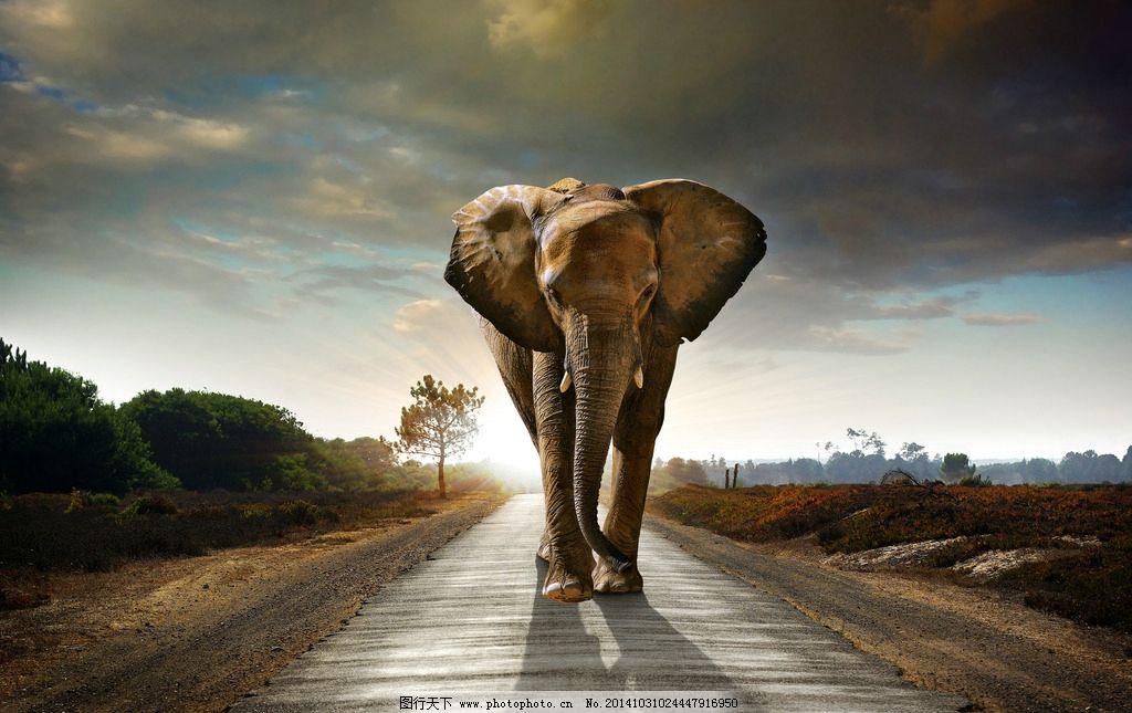 大象图片_野生动物_生物世界
