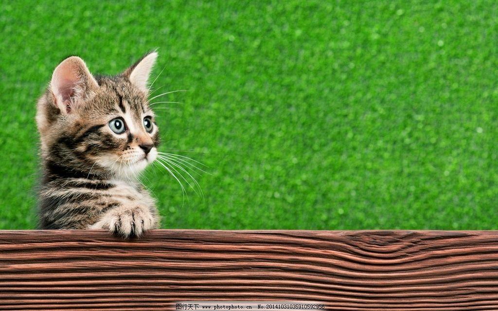 可爱 木板 小猫咪 小猫 猫咪 喵星人 萌猫 萌宠 宠物 家庭宠物 家宠