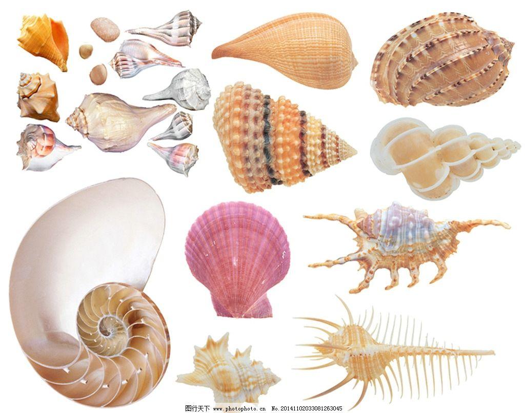 海螺素材图片图片