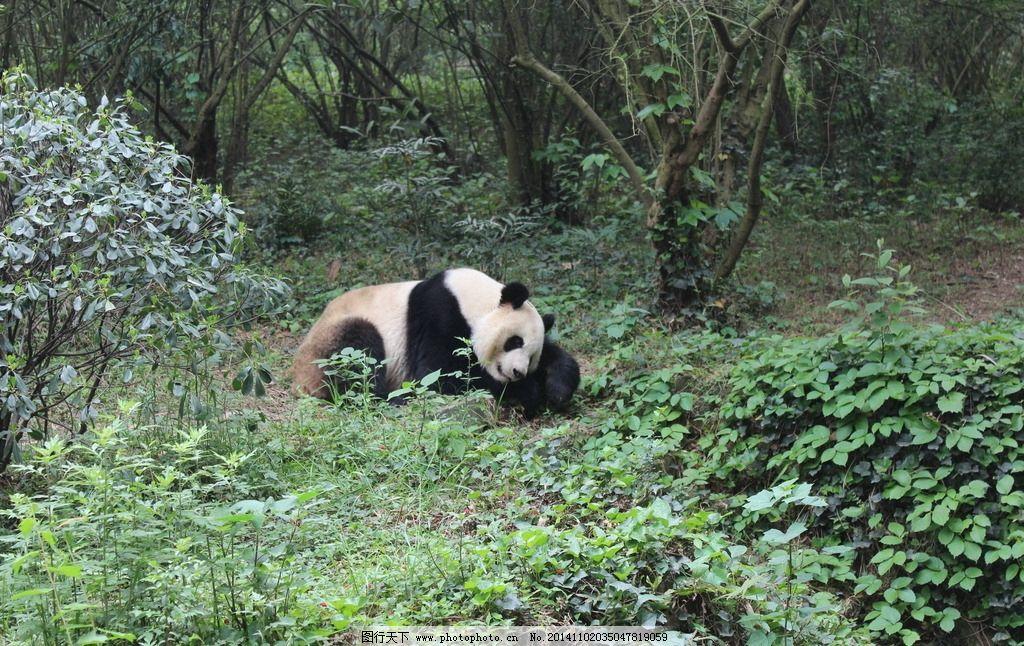 熊猫25m08j电路图