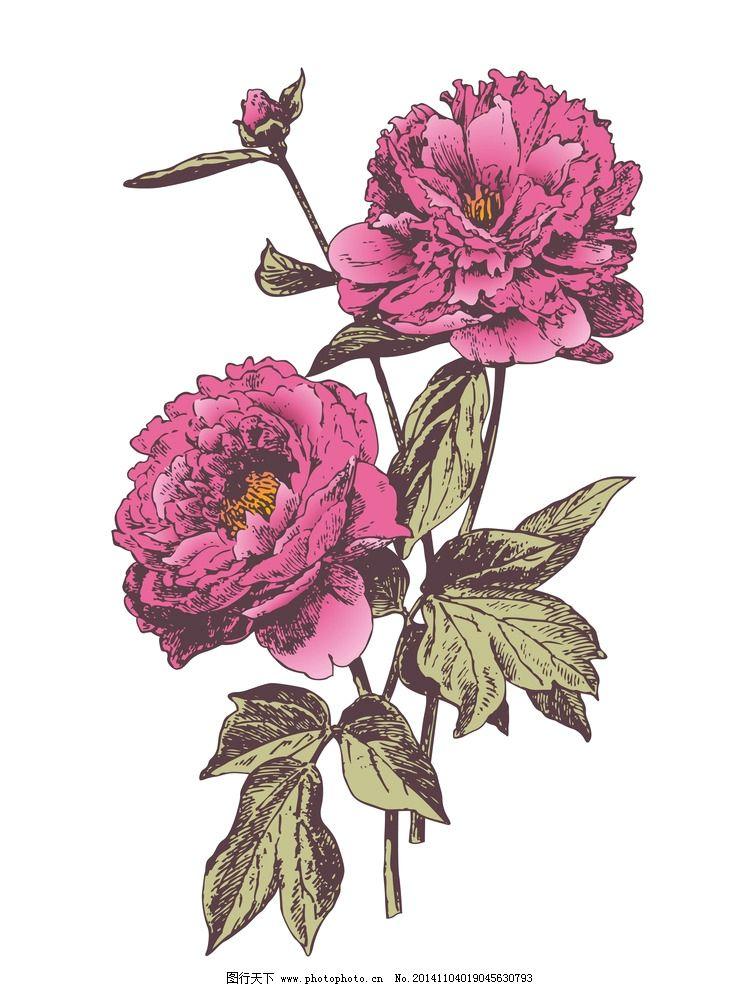 牡丹 牡丹花 花朵 植物 手绘 手绘植物 复古 欧式 欧式风格 古典 花卉