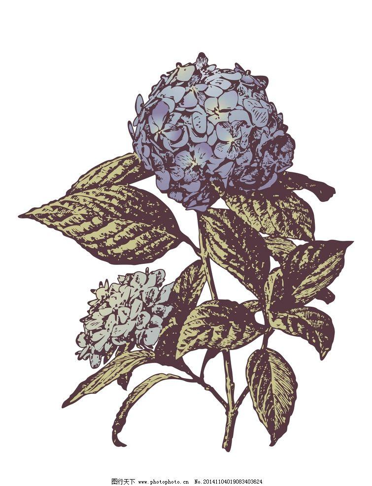 绣球花 花朵 植物 手绘 手绘植物 复古 欧式 欧式风格 古典 花卉 绘画