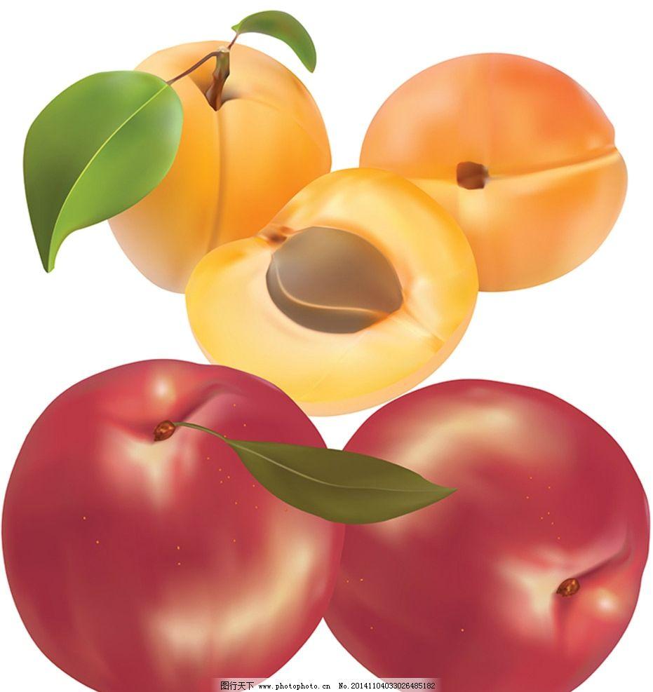 桃子素材 毛桃 光桃 北方桃品 南方桃品 矢量桃子 3d桃子 食物 设计
