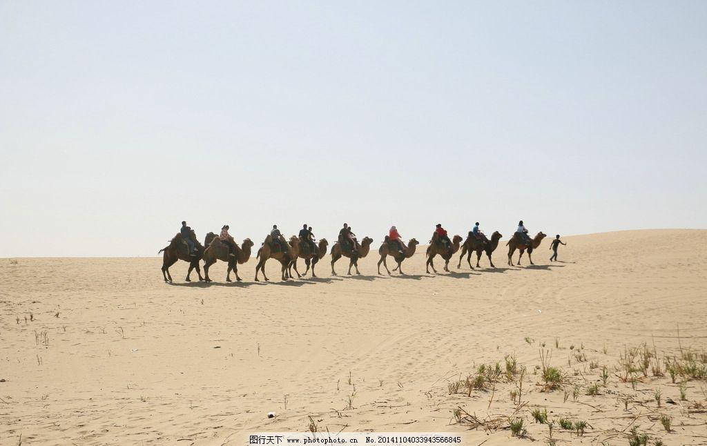 骆驼 骆驼队 新疆 塔克拉玛干 罗布人村寨 罗布人村寨 摄影 旅游摄影