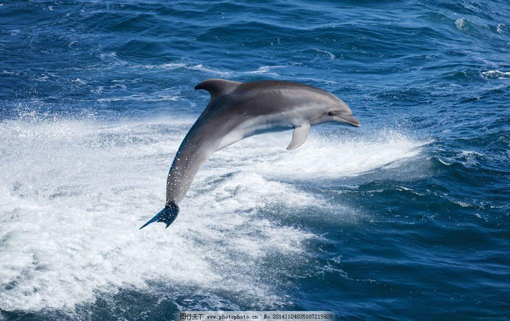 海豚 动物 海洋生物 大海