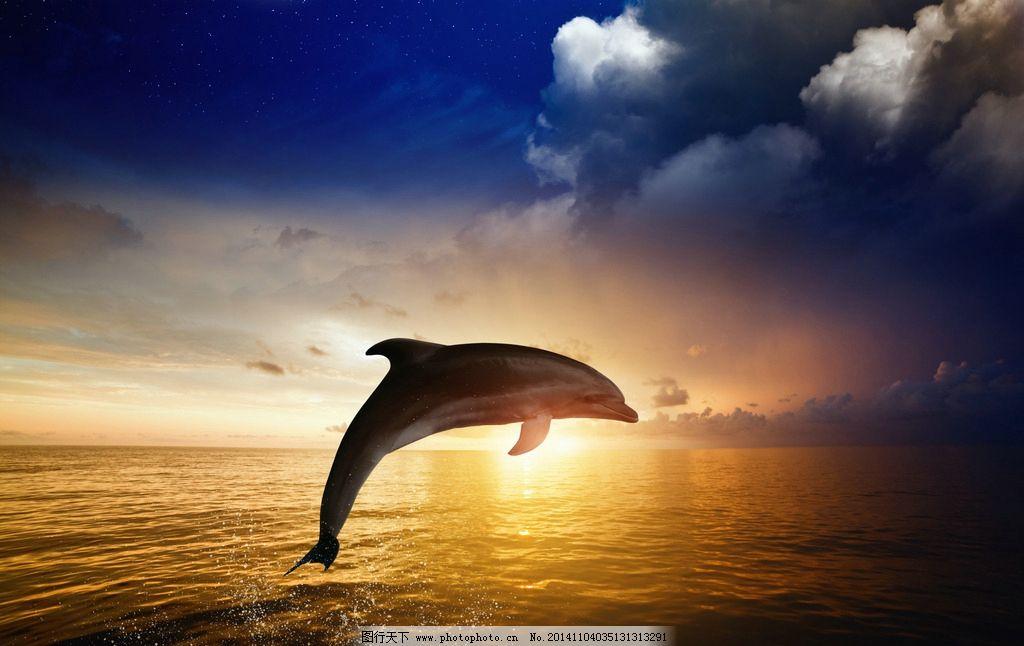 海豚 动物 海洋生物 大海 晚霞 落日 保护动物 野生动物 生物世界