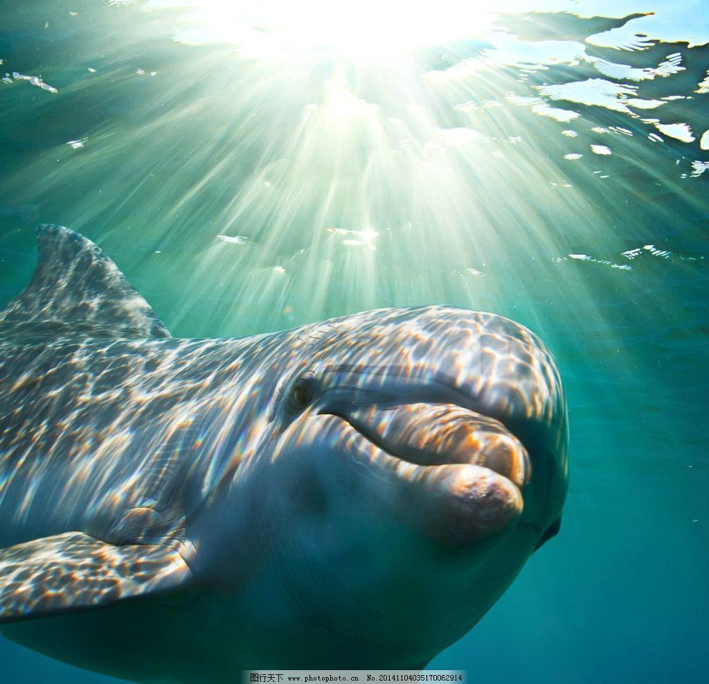 海豚 动物 海洋生物 大海 阳光 光线 保护动物 野生动物 生物世界