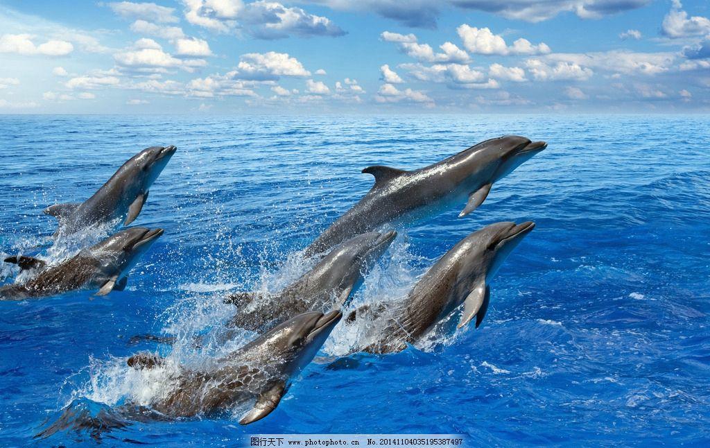 海豚 动物 海洋生物 大海 海浪 浪花 保护动物 野生动物 生物世界图片