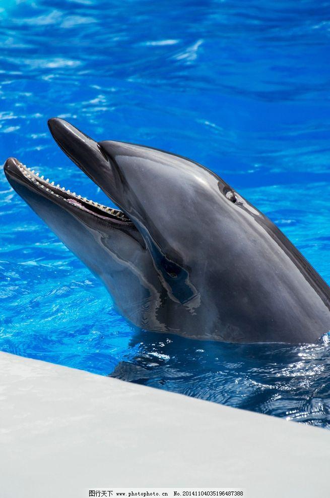 海豚 动物 海洋生物 大海 保护动物 野生动物 生物世界 鱼类 摄影