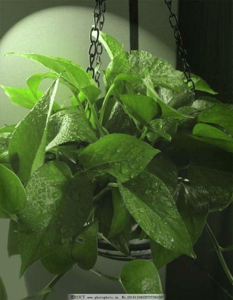 室内植物 盆景 绿色植物 原生 摄影 摄影 生物世界 花草 72dpi jpg
