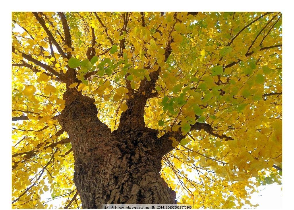 美丽秋景图片_树木树叶_生物世界_图行天下图库