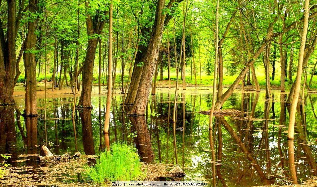 雨林 热带雨林 绿色清新 树林 树木 绿色植物 绿色 清新 大树 绿树
