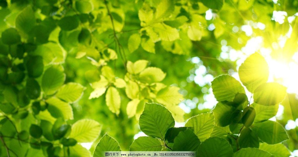 小清新护眼壁纸 高清壁纸 小清新树叶 摄影 太阳光 自然景观