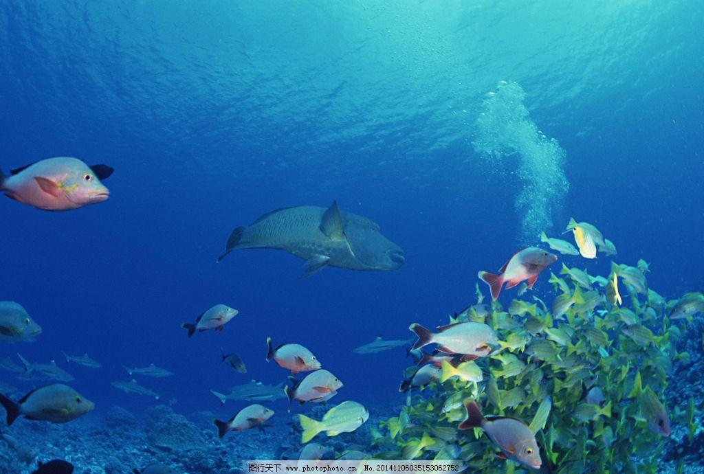 大海 鱼 热带鱼 蓝色 海底 海洋 海底世界 摄影图片
