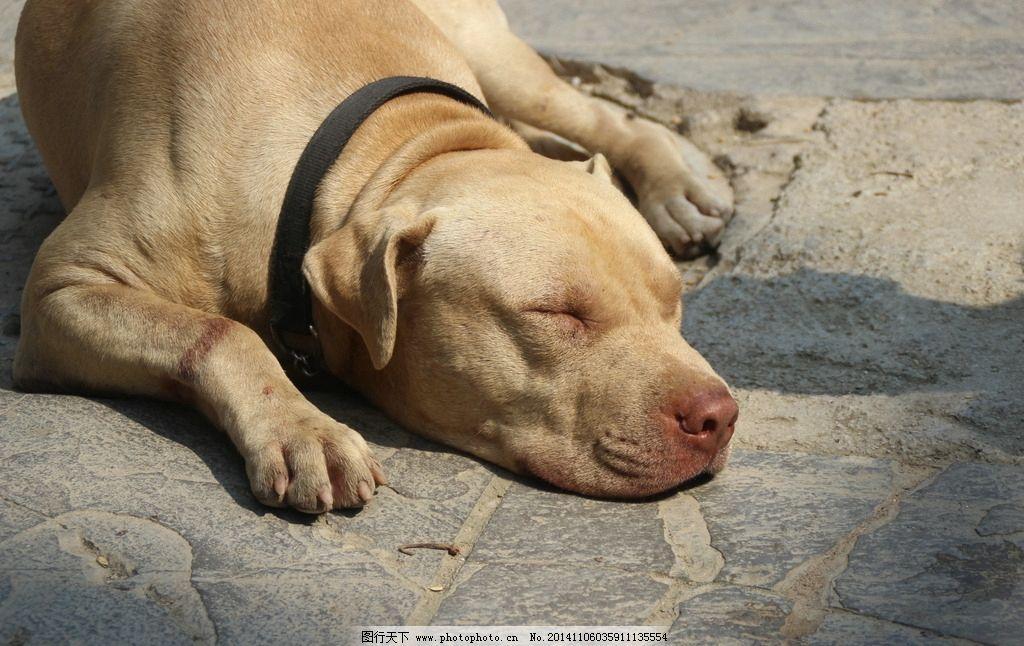 像猪的狗 贵州 犬 傻狗 动物 睡觉 狗睡觉 摄影