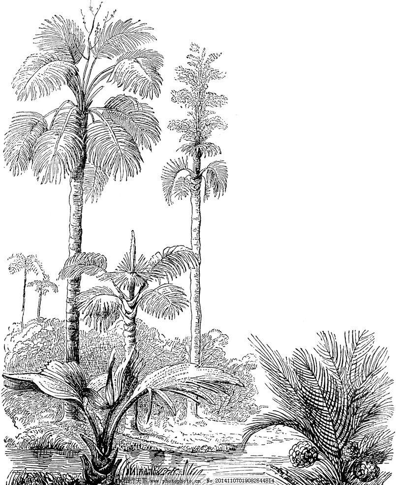 树 树林 田野 树林素描 树林插画 树手绘 大树 设计 文化艺术 绘画