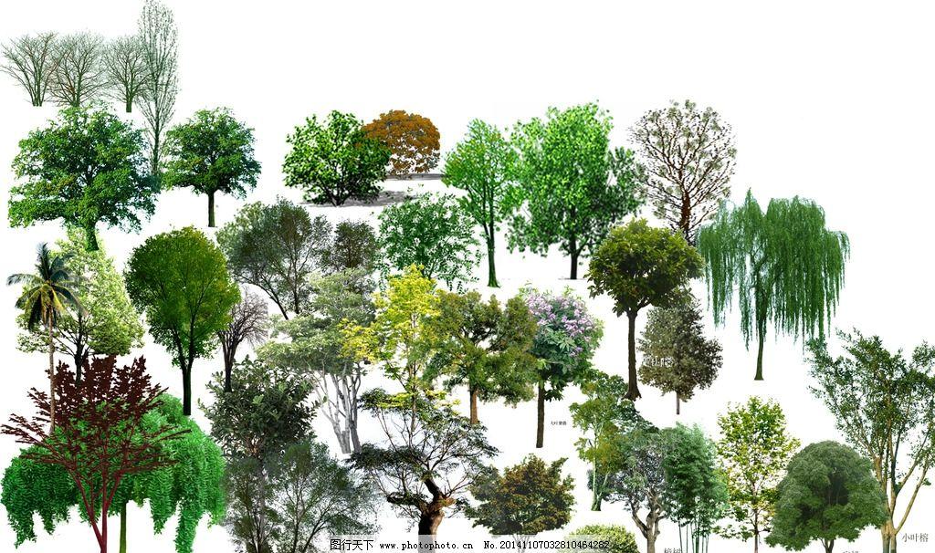 手绘立面景观植物图片