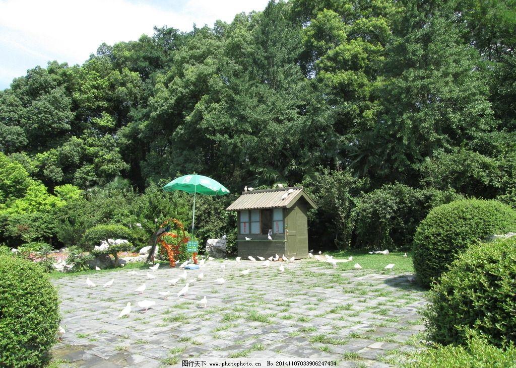 瘦西湖 风景 孔雀 植物 美景 摄影 旅游摄影 国内旅游 180dpi jpg